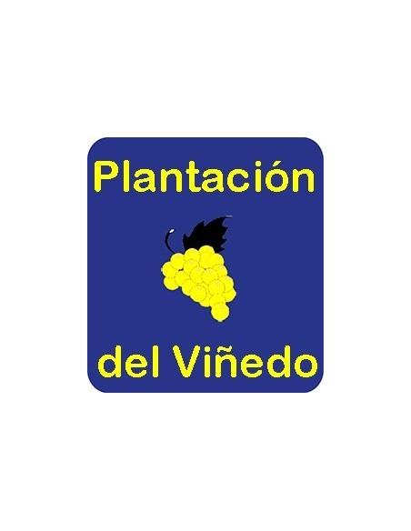 Plantación del Viñedo